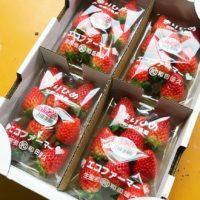 和田農園様の「幻の苺まりひめ」のネット販売スタート!